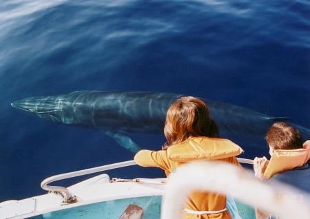 【★はたの夏休み★】鯨のお姉さんがご案内!黒潮ホエールウォッチング体験
