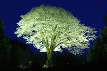 牧野の里 月光桜(3月下旬から)